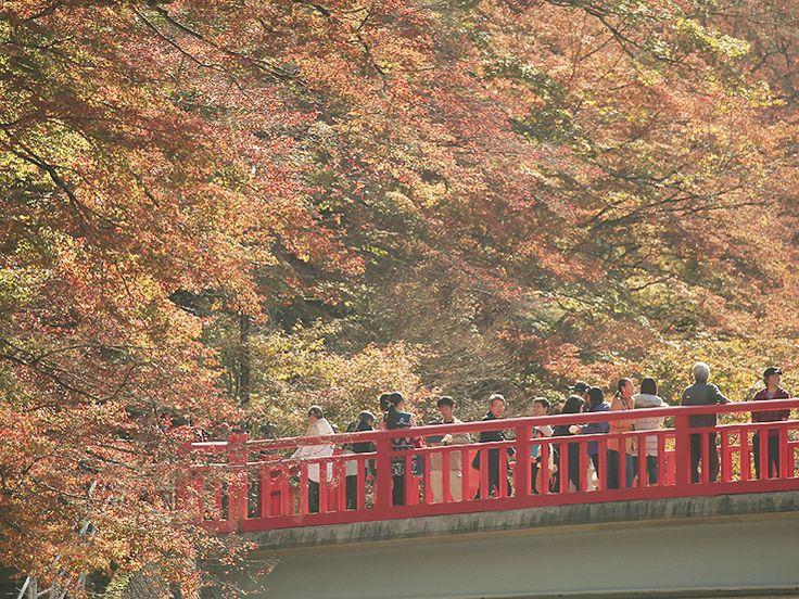 愛知県豊田市の「香嵐渓」で紅葉が見頃