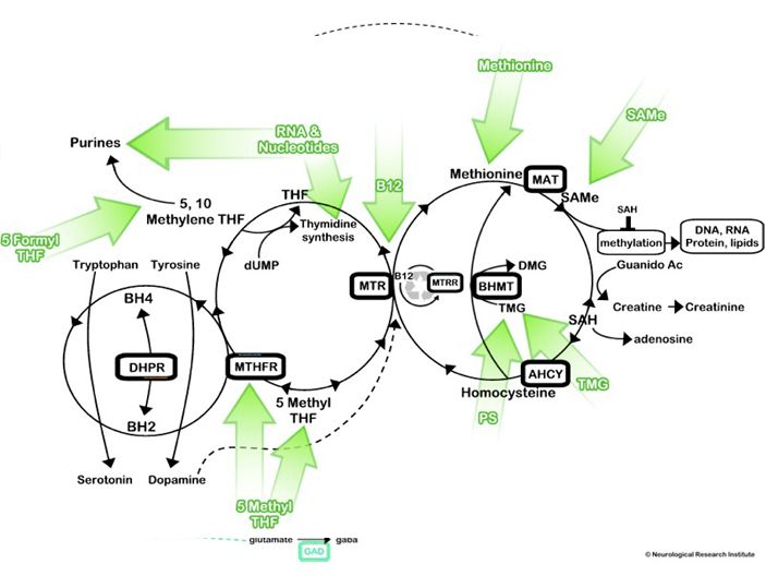 32 best images about MTHFR and Methylation on Pinterest