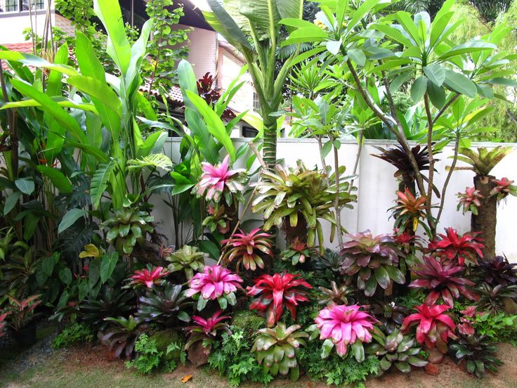 381 best Tropical Garden style images on Pinterest Tropical