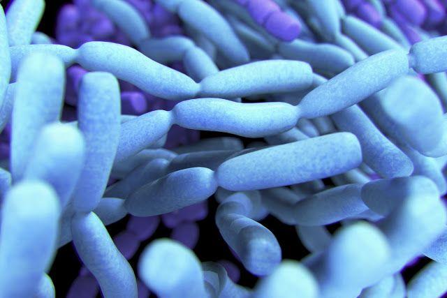 Armonía, Salud y Vida: Nuestros aliados maravillosos: Los Probióticos