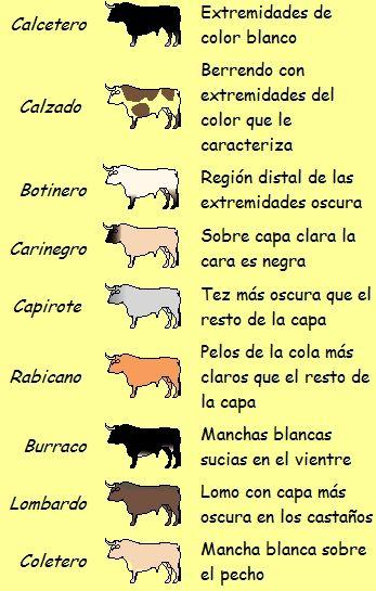 Son las coloraciones que presenta el pelo que recubre el cuerpo del toro de lidia. Son fundamentalmente tres: negra, blanca y colorada. Si s...