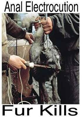 stop killing for fur coats Seal hunting, or sealing, is the personal or commercial hunting of sealsseal hunting is currently practiced in nine countries and one region of denmark: alaska(above the arctic circle), canada, namibia, iceland, norway, russia, finland, sweden, and greenland.