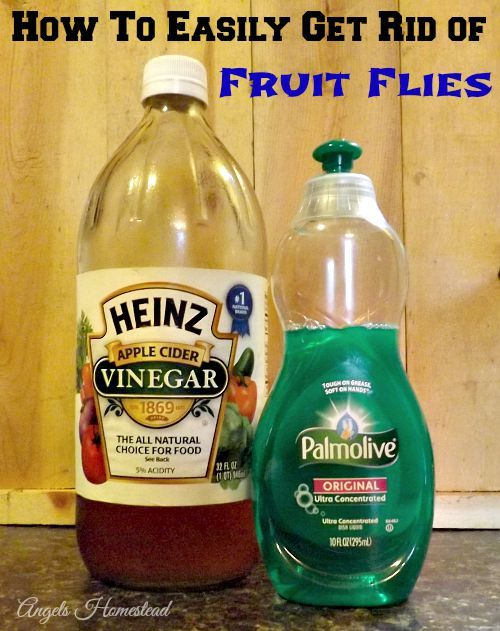 blue fruit best way to get rid of fruit flies