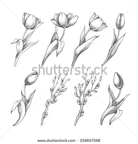 Set Of Spring Flowers Tulips Branches Pencil Sketch Collection Vector Illustration
