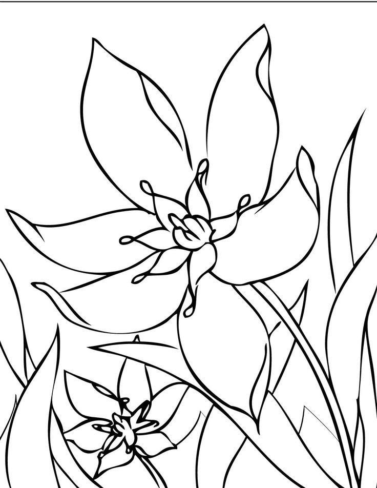 266 best flower pic images on Pinterest  Printable coloring