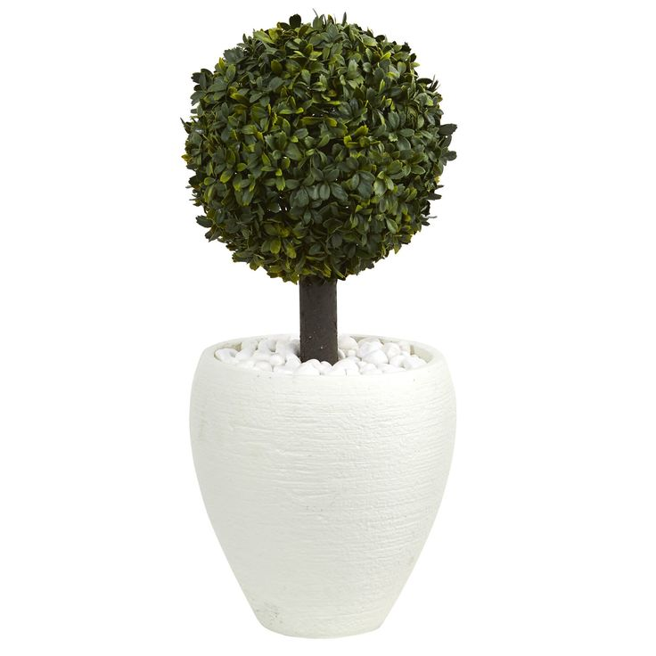 "Nearly 26"" Boxwood Topiary Artificial Tree in White Oval Planter"