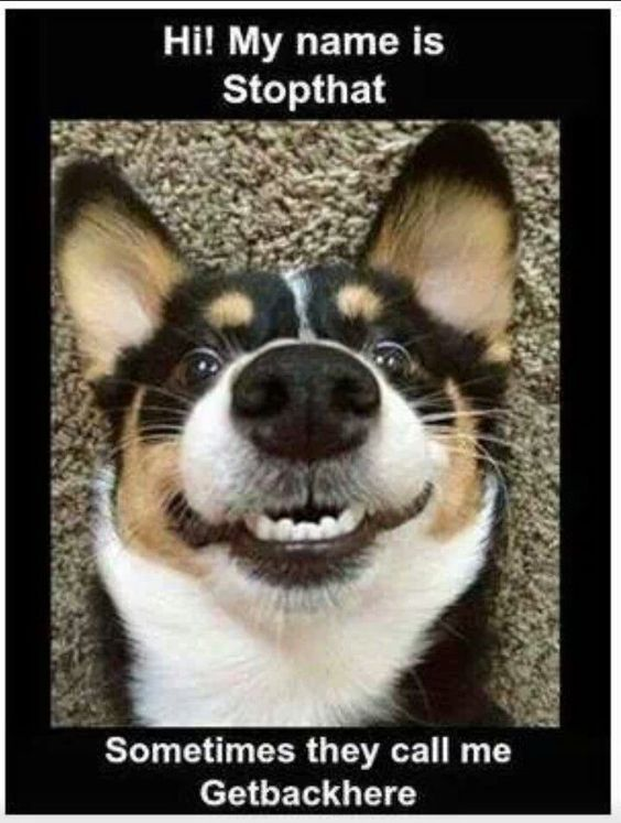 05798e8d9798dd5d5fcb2a5595e77132 lol funny funny dogs best 25 puppy meme ideas on pinterest funny puppy memes, funny,Does Your Dog Bite Meme