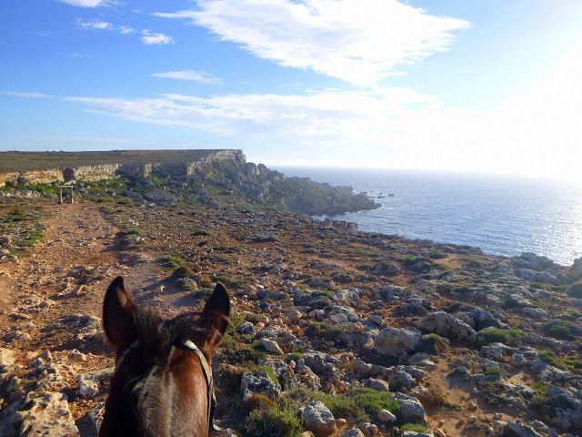 Visiter Malte # 3 - Mdina et Balade à cheval sur la côte maltaise | Carnet d'escapades