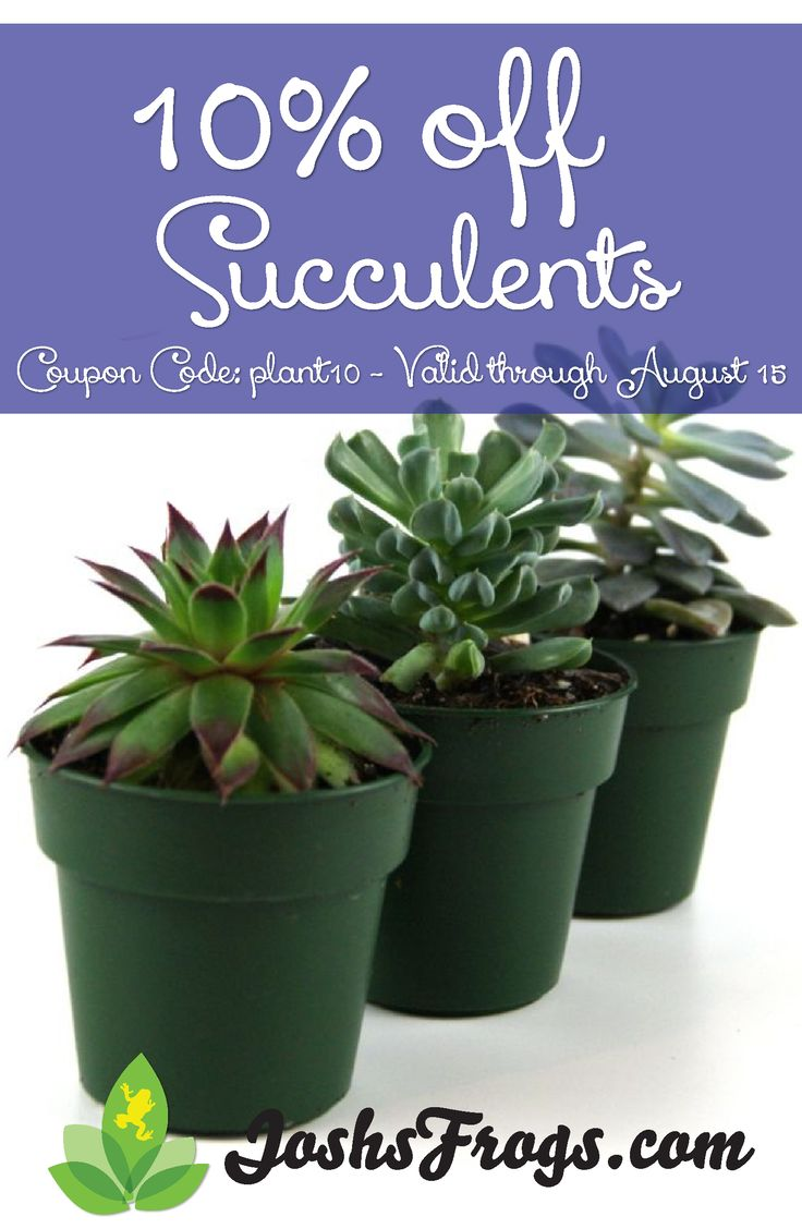 13 best miniature gardening images on pinterest miniature gardens simple caresheet for succulents and cacti also a full line of succulents and cacti available for purchase fandeluxe Image collections