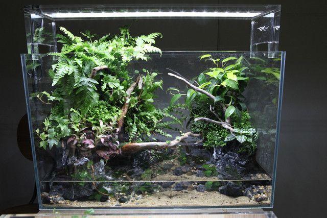 ... AQUASCAPE on Pinterest Terrarium shop, Aquarium supplies and Plants