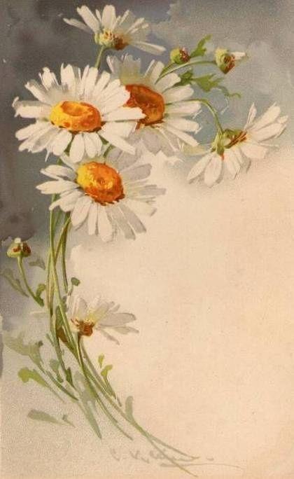 Ромашки от немецкой худождницы Кэтрин Клейн