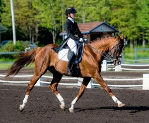 Throw everything you thing about OTTBs in dressage out the window, becuase this boy is doing PSG!