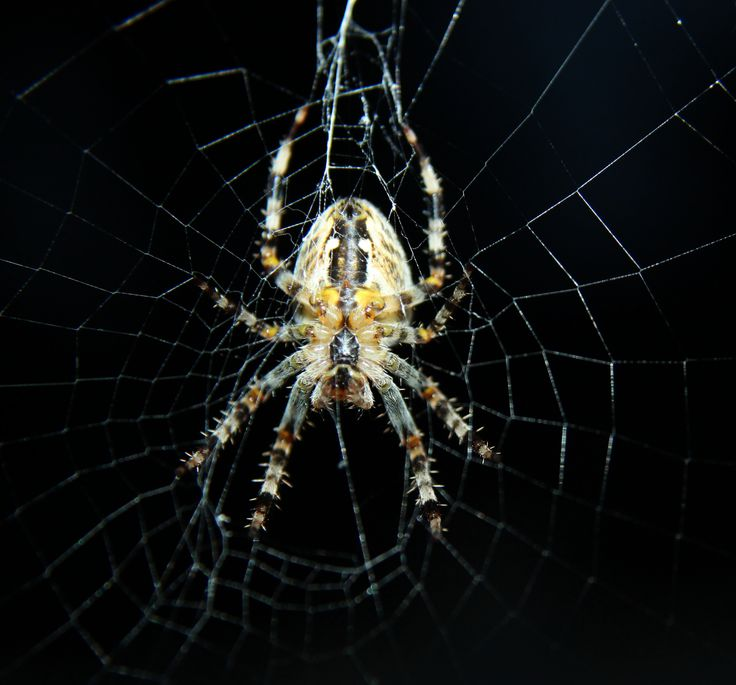 Cool Picture of a Spider