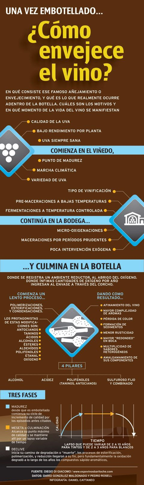 10 infografías sobre el vino que te van a interesar | The Big Wine Theory