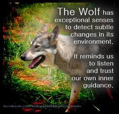 Spirit Animals And Their Meanings | Wolf Spirit Animal-A Power Animal Symbolic Of Freedom