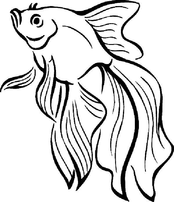 √ malvorlage fisch umriss  fischlexikon