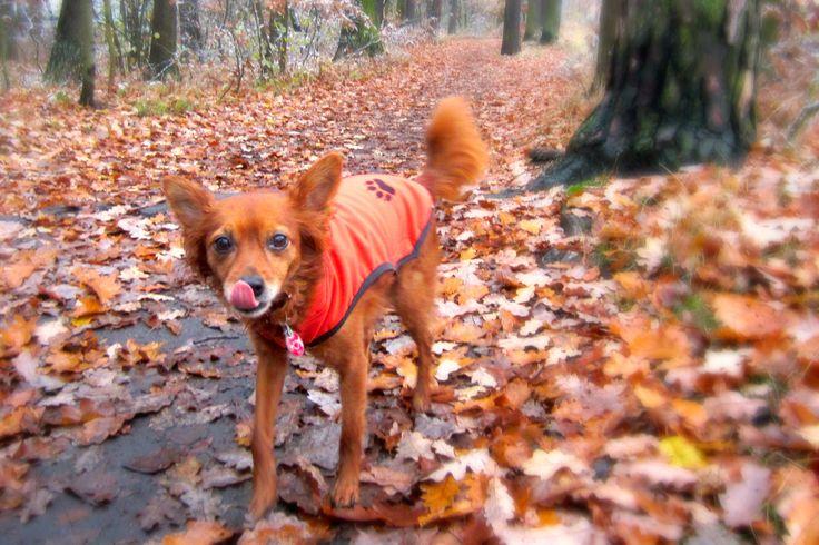 #davidlister #autumn #dog