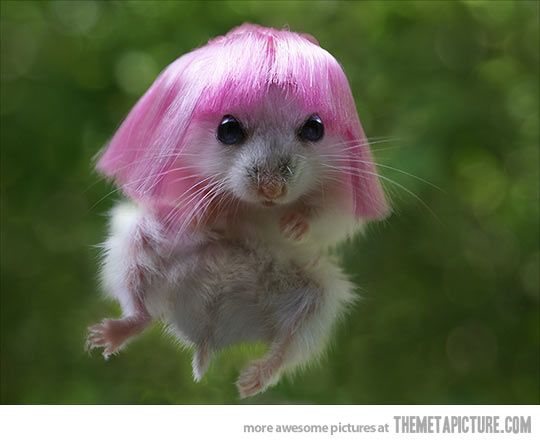 The Latest Version Of Hamster Minaj Funny Picture - Cute Animals Pictures