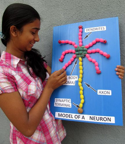 Toys from Trash - Model of a neuron                                                                                                                                                                                 More