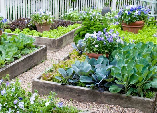You don't need a lot of space to grow vegetables and herbs. In fact, in a 4 x 4 raised bed you can grow enough food to feed a family of four. You can supplement your groceries with edibles grown in containers, hanging baskets, pallet gardens and window boxes.