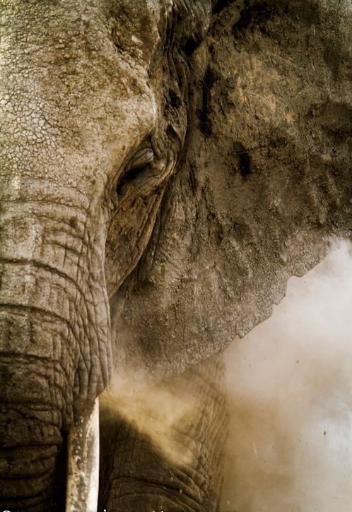 I <3 Elephants.. they just look like they've been through it all and still up and going...