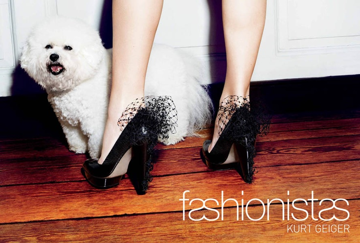 Kurt Geiger campaign: Women Fashion, Fashion Shoes, Dogs Fashion, Gorgeous Shoes, Beast Obsession, Premium Shoes, Black Heels, Shoes Obsession, Kurt Geiger