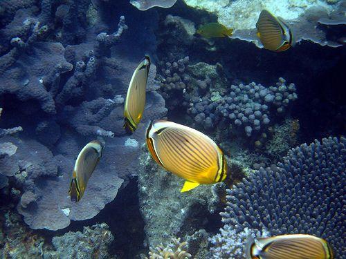 The Ningaloo Reef off Coral Bay  #WesternAustralia