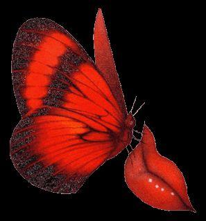 Butterflies animal graphics