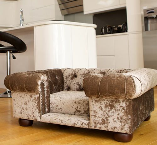 Best Balmoral Truffle Velvet Luxury Dog Sofa Sofa Bed Uk Dog 400 x 300