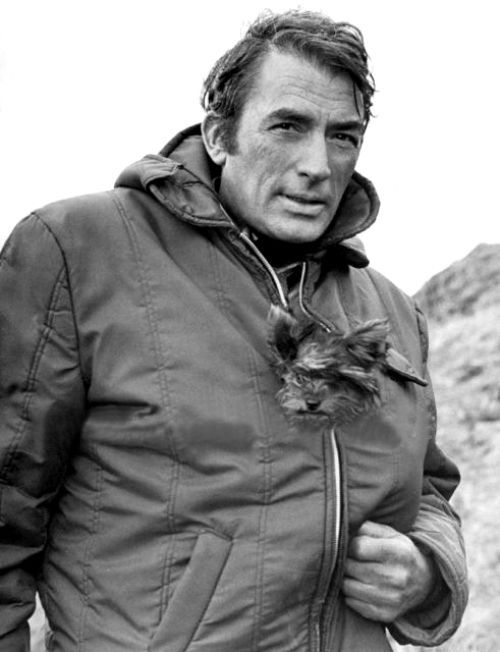Gregory Peck with a yorkshire terrier  #HEROIKX