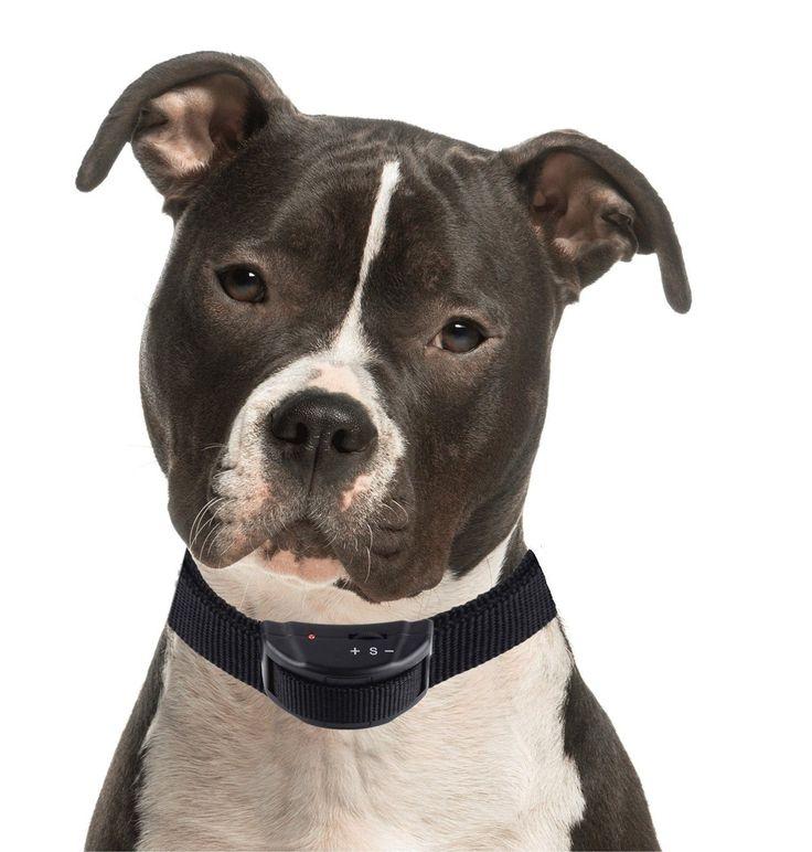 Best Anti Dog Barking Device Uk