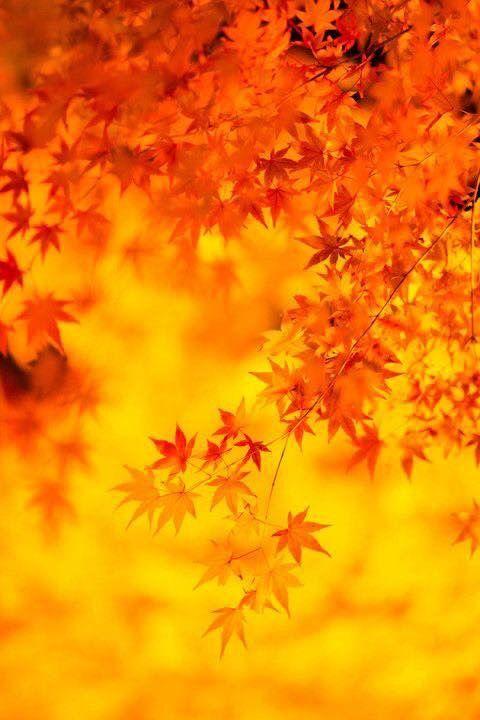 16.10/17.「澤村由可」