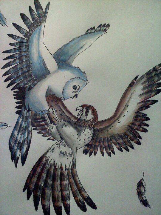 Hawk vs owl - photo#25