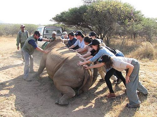 Murdoch Vet Students go on an excursion to Africa.