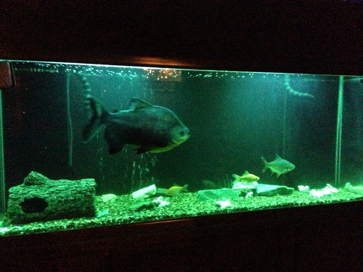 My amazing 150 gallon fish tank