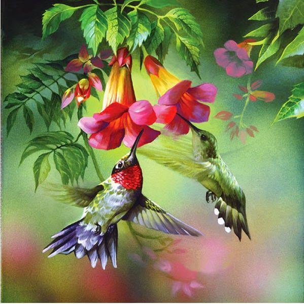 el colibrí se conoce como un mensajero, y guardián del tiempo, También tiene significados de amor, alegría y belleza. El colibri tiene un significado espiritual muy poderoso en el Sur, el colibri significa RESURRECCION. Parece morir en las noches frias, pero vuelve a la vida de nuevo al amanecer