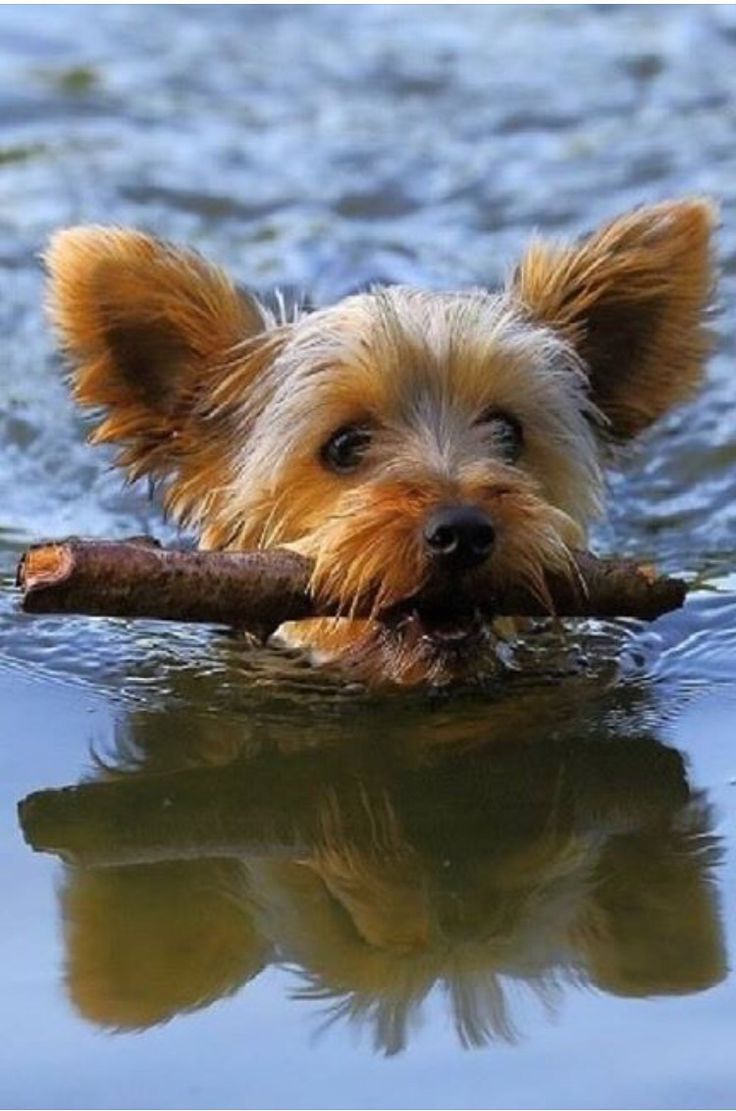 best chiens images on pinterest doggies adorable animals and
