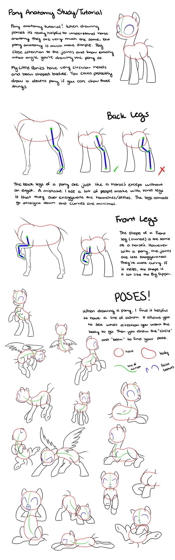 Pony Anatomy Tips/Study/Tutorial by kilala97 on DeviantArt