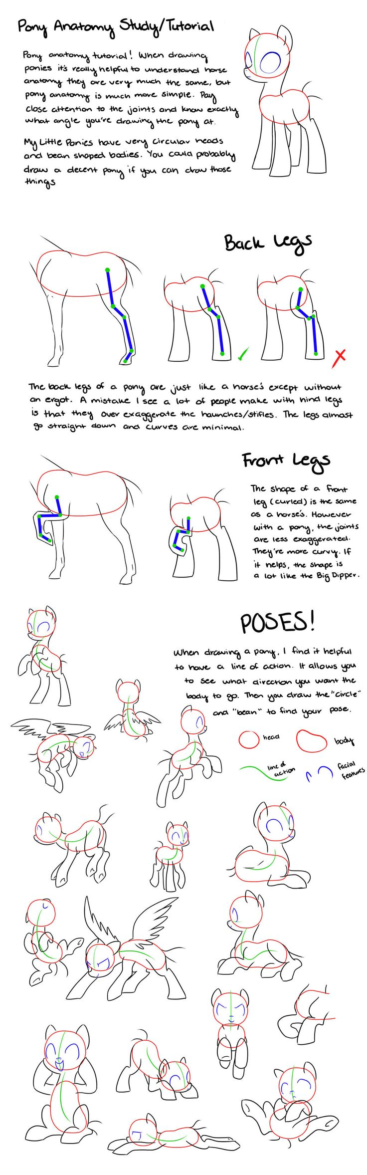 Pony Anatomy Tips/Study/Tutorial by kilala97 on DeviantArt