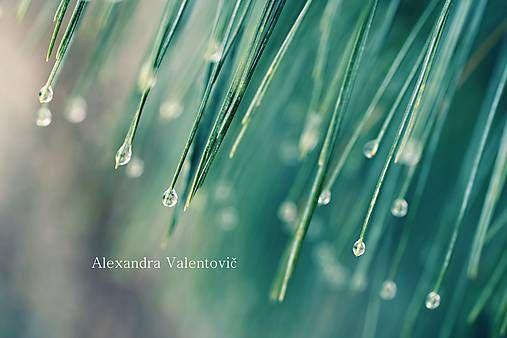 AlexandraValentovic / Po daždi The rain