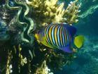 Heliconia Luxury Beach House - Rarotonga, Cook Islands