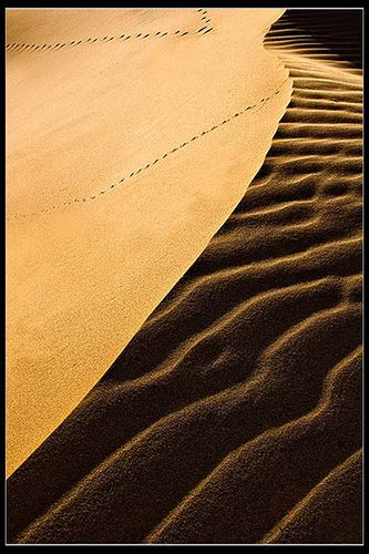 South Africa - Bonza Bay: Dune Lines by John & Tina Reid, via Flickr
