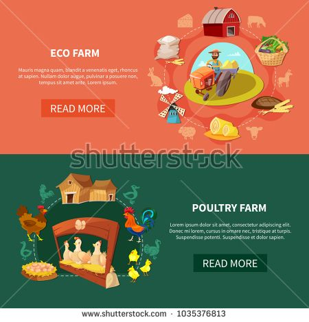 Stock Vector: Two horizontal farm cartoon banner set with eco and poultry farm headlines vector illustration