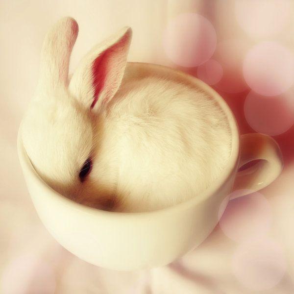 or a teacup bunny wabbit, omfg. Teas Time, Sweets, Teas Cups, Easter Bunnies, Baby Bunnies, Baby Animal, Drinks, Teacups, White Rabbit