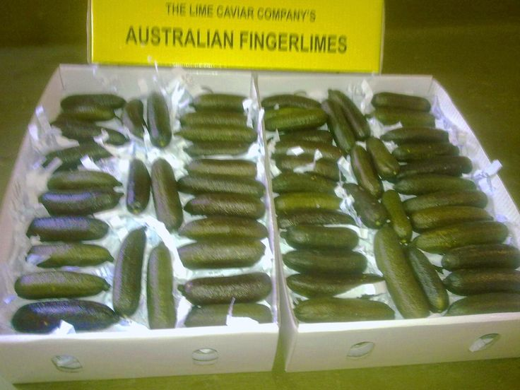 Our Finger Limes come in 1 kilo boxes.