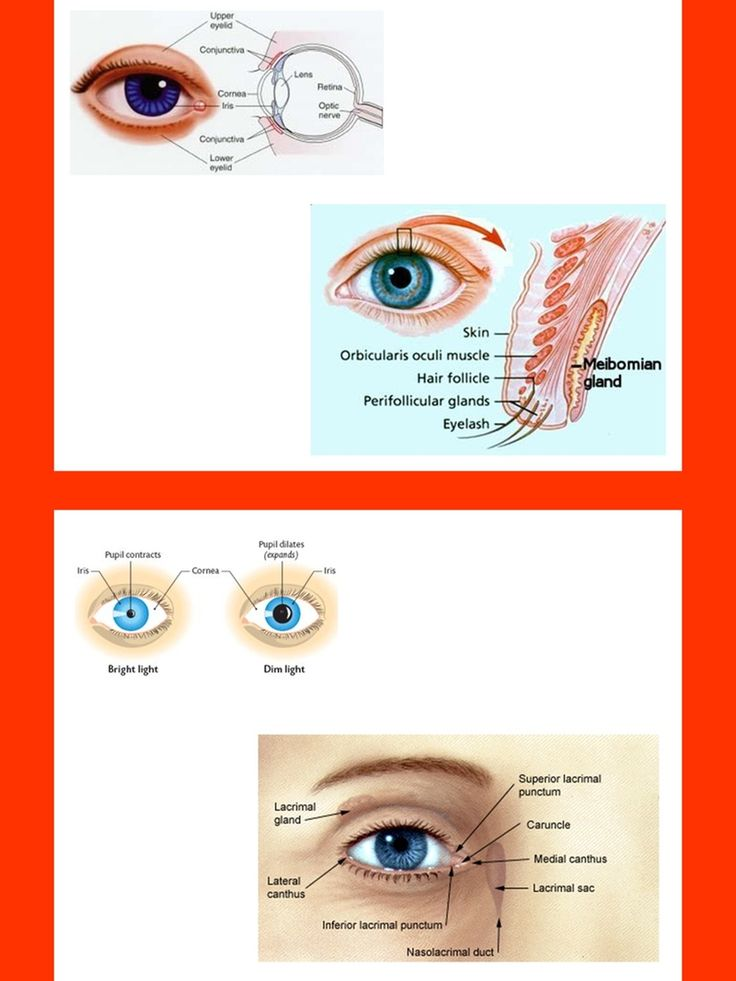 Eye Anatomy and Vision Testing Charts and Diagrams with ...