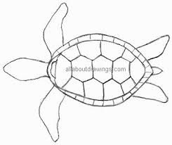 Image result for turtle drawing