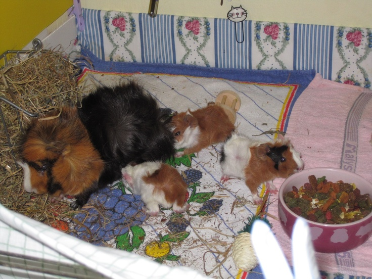 Babies piggies only 1 day of life.They were born at 16/6/2012!!Sweet memories