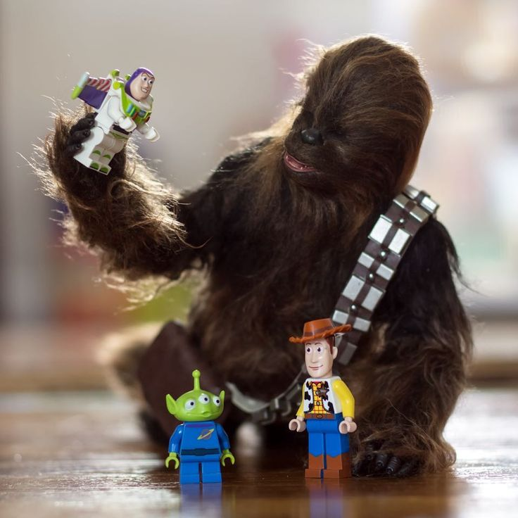 Chewie wanted to join in on @mitchelwuphotography s 28 days of Toy stories.  #chewbacca #hottoys #onesixthrepublic #sixthscale #solo #hansolo #sideshowcollectibles #toystory #lego #legos #buzzlightyear #woody #goodtoypics #starwars #toysaremydrug #toycrewbuddies  #toyartistry  #acba  #toyphoto #toyphotography #toptoyphotos  #toydiscovery  #actionfigurephotos #actionfigures #epictoyart #toys #toyplanet #toycommunity #tz_ata_aliens #tcb_easydogeasy