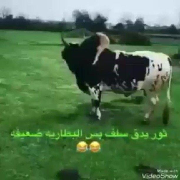 Amerh On Instagram يبي له شحن المسكين اكسبلور من الاكسبلور طق فولو لايك كومنت صورة فيديو دمج شغل Instagram Posts Things To Sell Animals